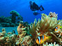 Scuba Diving In The South Pacific